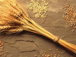 wheat-1024x400
